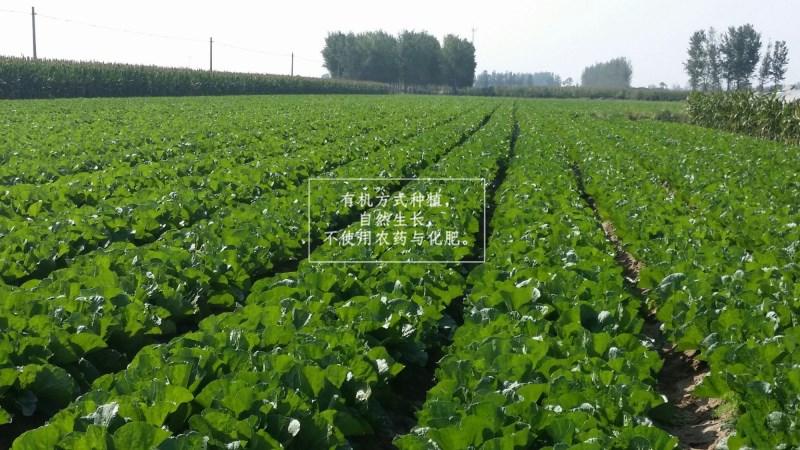 壁纸 成片种植 风景 植物 种植基地 桌面 800_450